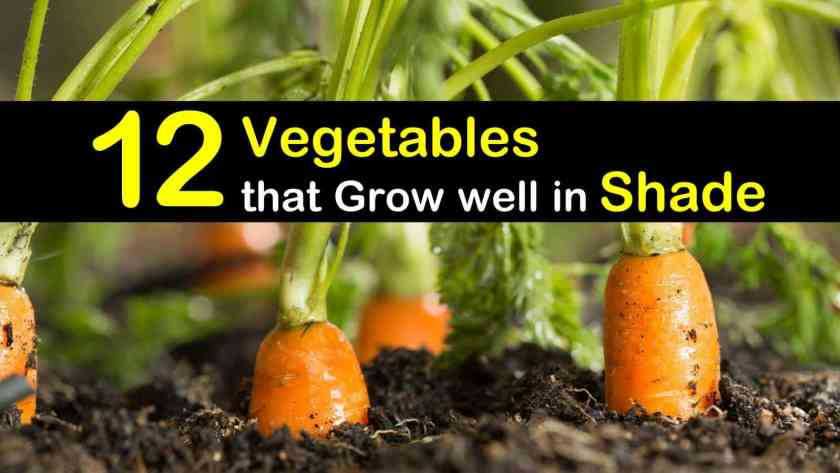 vegetables-that-grow-well-in-shade-t1