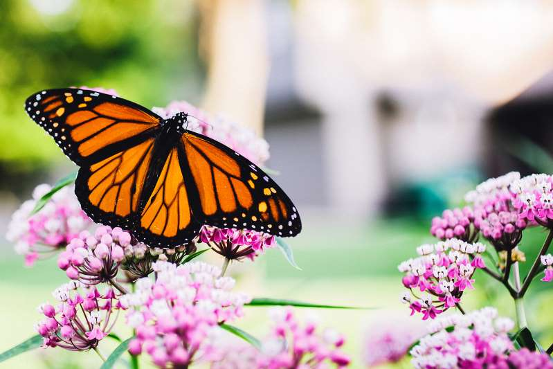 Butterfly raising