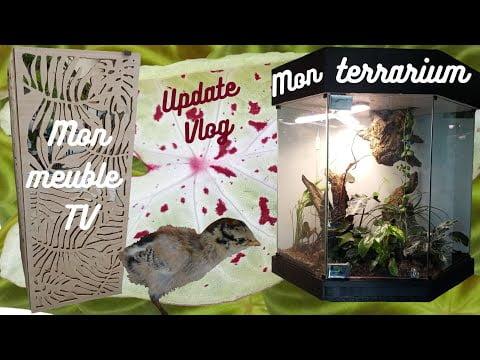 Terrarium tropical, DIY meuble TV et petit update de mon précédent vlog !