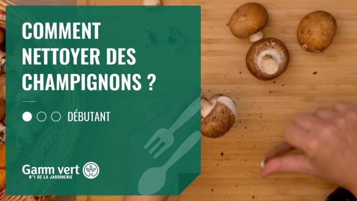 [TUTO] Comment nettoyer les champignons ? – Jardinerie Gamm vert