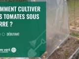 [TUTO] Comment cultiver les tomates sous serre  ? – Jardinerie Gamm vert