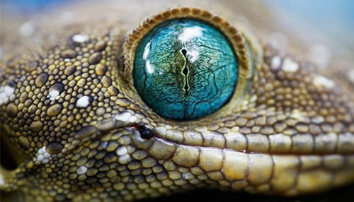 50+ Beautiful Wildlife and Animal Wallpapers from National Geographic