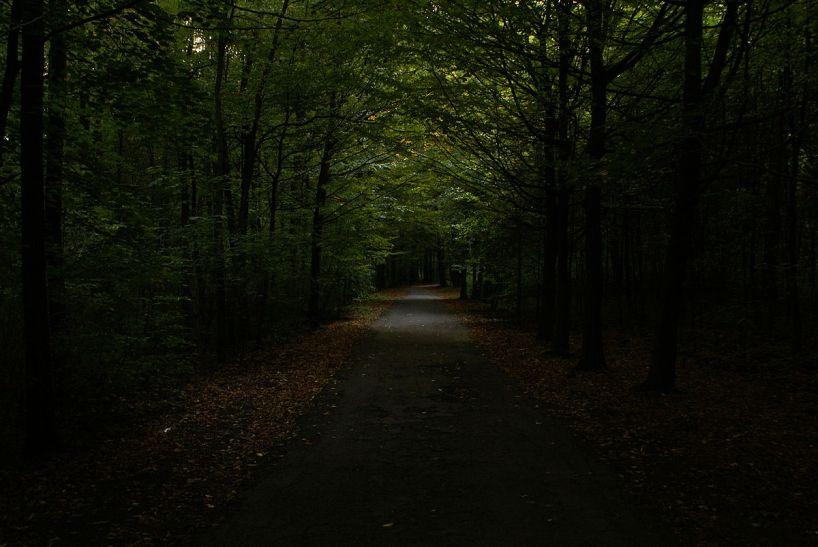 1200px-Park_repecki_w_Tarnowskich_Górach_(2),_MTK