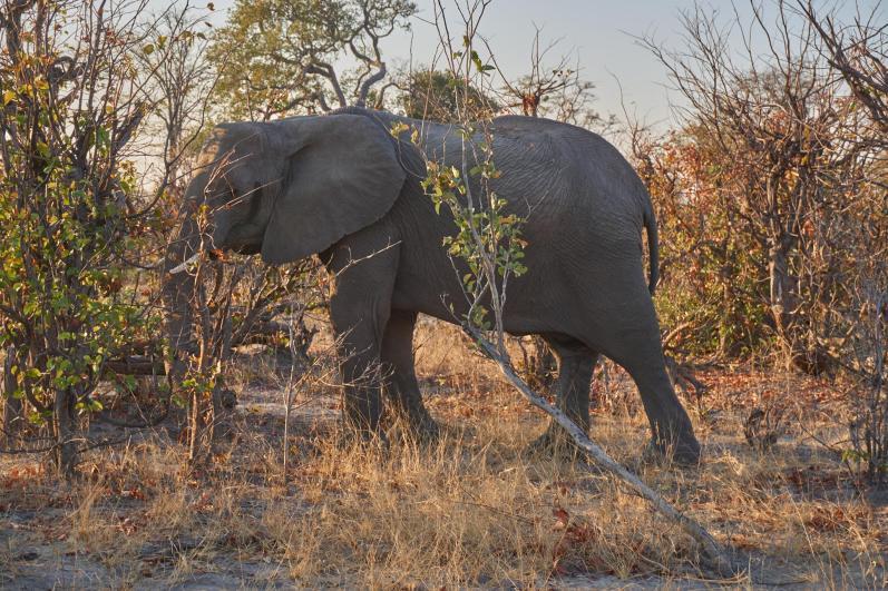 Słoń stojący przy drodze