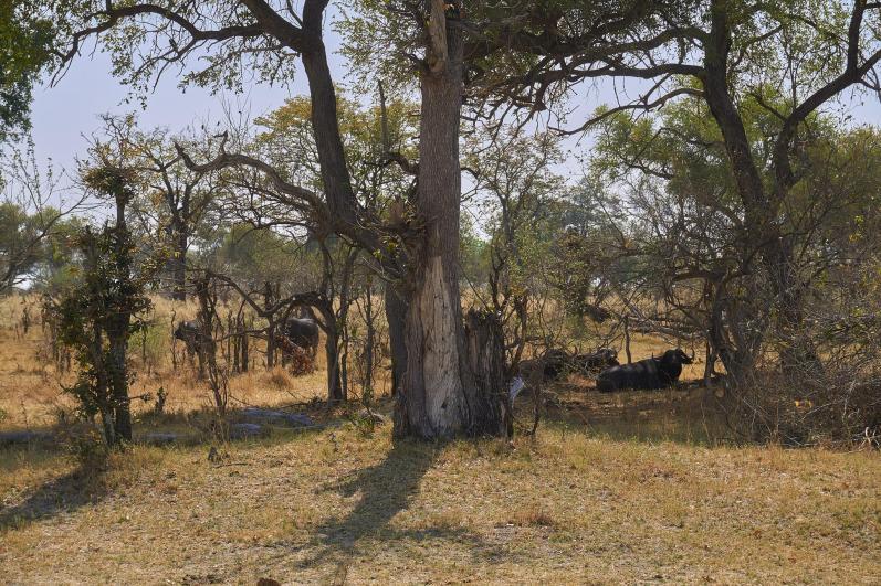 Delta Okavango