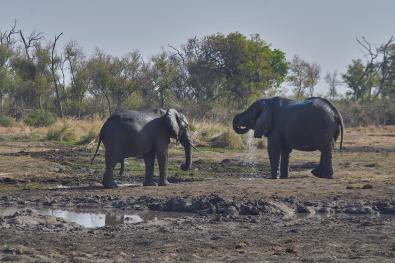 Słonie przy wodopoju