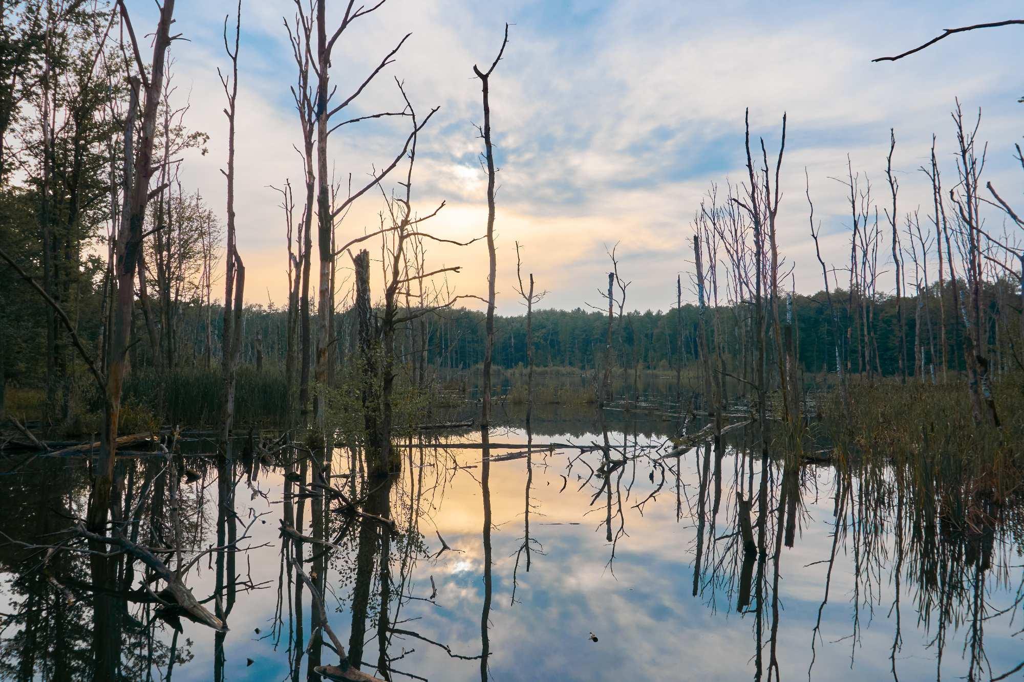 Uroczysko Buczyna - zbiorniki w nieckach osiadania