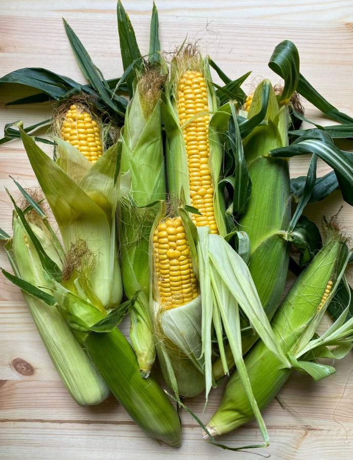 Vikhögsmajs: Självplock av majs och solrosor i Skåne