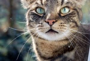 Cat Nova Richmond