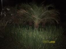 Hasil Foto KameraVivo Y65 Malam Hari dengan LED Flash