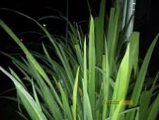 Hasil Foto KameraXiaomi Redmi Note 5A Malam Hari dengan LED Flash