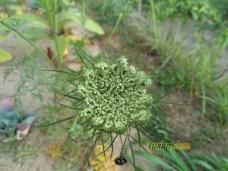 Bunga hijau