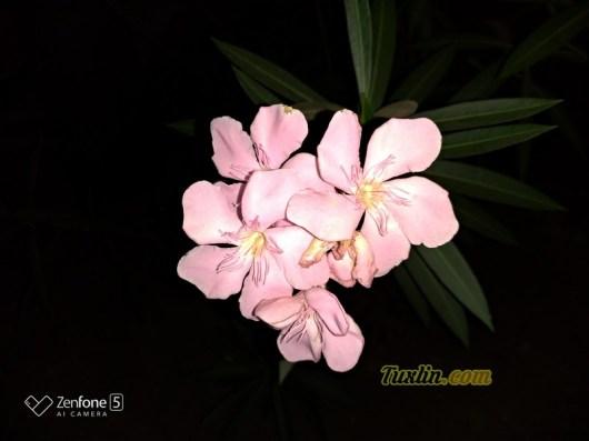 Hasil Foto KameraAsus Zenfone 5 ZE620KL Malam Hari dengan LED Flash