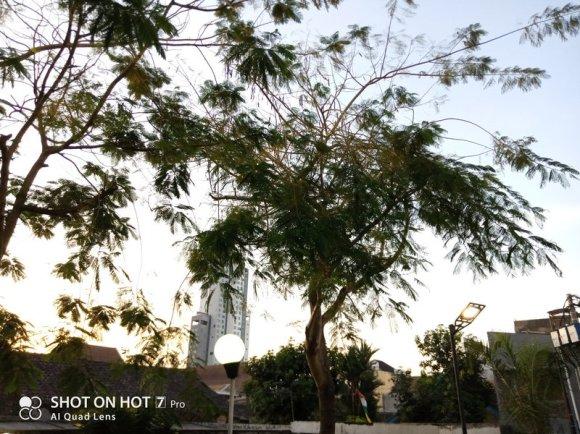 Review Kamera Infinix Hot 7 Pro: Ternyata Kayak Gini Quad Camera Murah 9