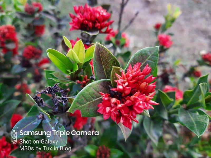 Review Kamera Samsung Galaxy M30s Berkekuatan 48MP! 26