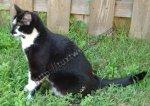 Oakley the Cat