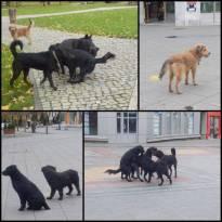 lutalice-psi