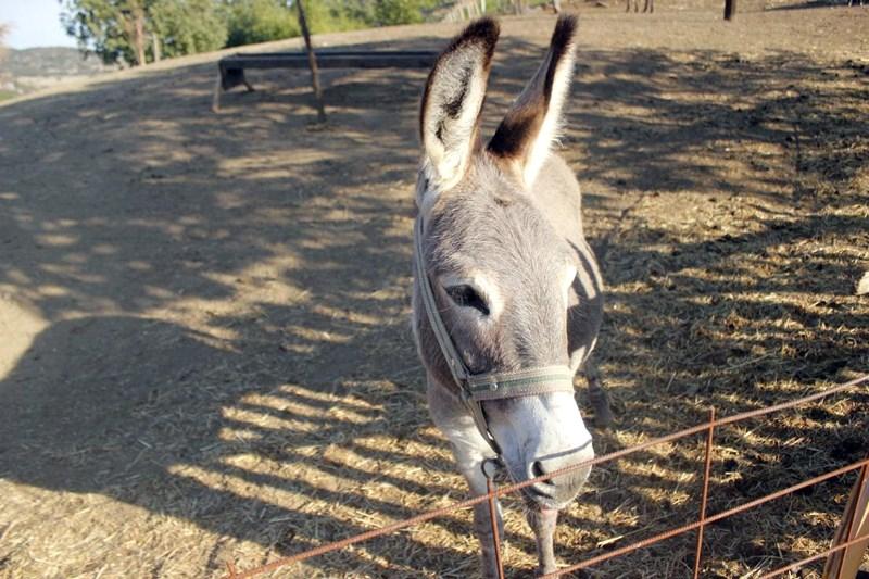 vruće magarca veliki nos veliki kurac