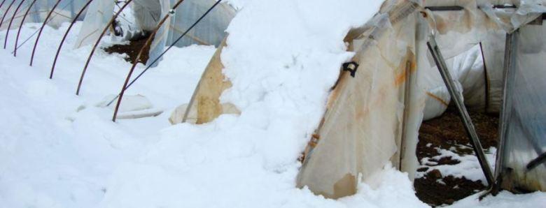 plastenik-steta-snijeg
