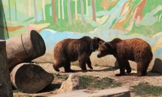 zoo-park-tuzla (16)