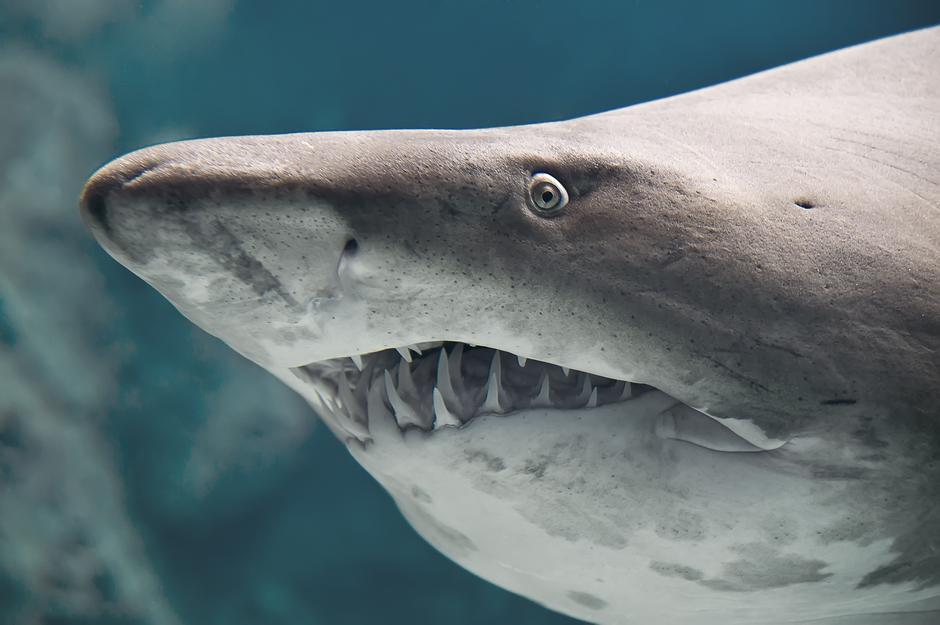 Druženje s morskim psima