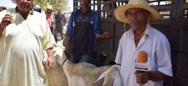 حصرى بوسعادة انفو ترصد أسعارألاضاحي في سوق المواشي