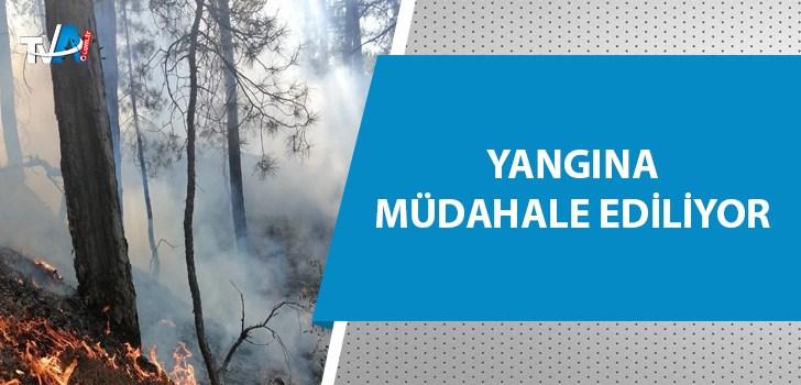 Kozan'da yeniden yangın