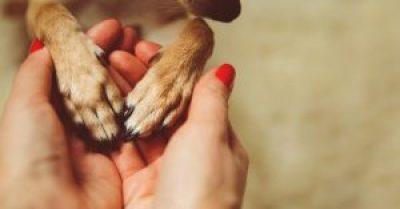tv Catia Fonseca 5 dicas para adotar um animal de estimação Dra. Ana Carolina Teixeira Ibelli Patinha de cachorro