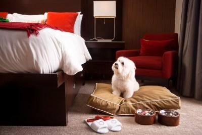 10 hotéis que aceitam cachorro