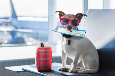 Tv Catia Fonseca pet 10 hotéis que aceitam cachorro
