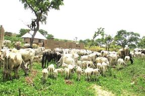 Anti-Grazing-Bill-Taraba-TVC