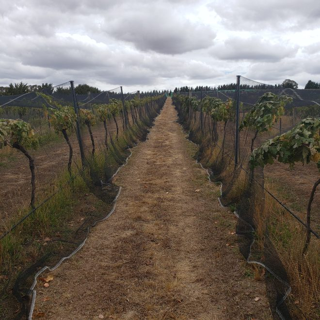 Tallagandra Hill Winery