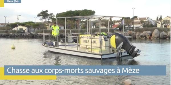 Chasse aux corps-morts sauvages sur l'étang de Thau