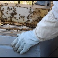 Les abeilles de Thierry