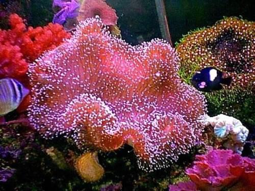 Кораллы-Описание-свойства-и-применение-кораллов-2