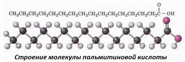 Пальмитиновая-кислота-Свойства-и-применение-пальмитиновой-кислоты-5