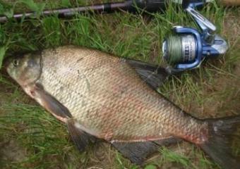 Поимка рыбы на специальные снасти