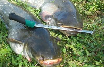 Улов рыбы на квок
