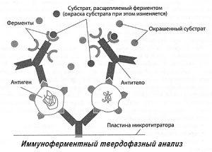 Herpesz prosztata kommunikáció