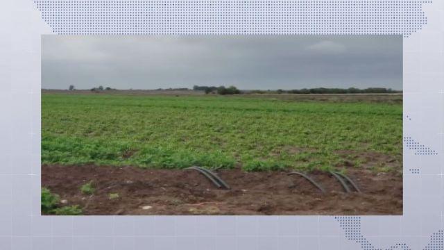 Se requieren 13 mil millones de pesos para comercialización de granos