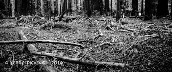Forest Debri