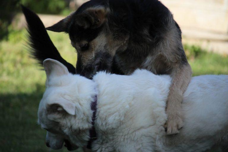two dogs hug