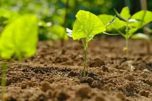 plants in good soil