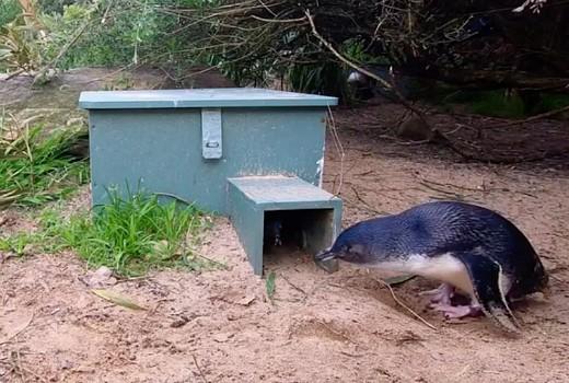 Taronga: Who's Who in the Zoo?: Feb 22
