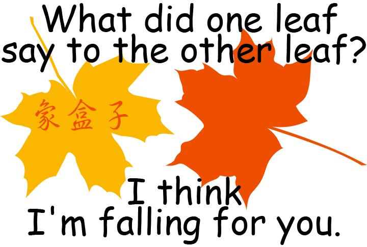 fall for you 愛上你 leaf 葉子 fall 落下 跌倒 秋天