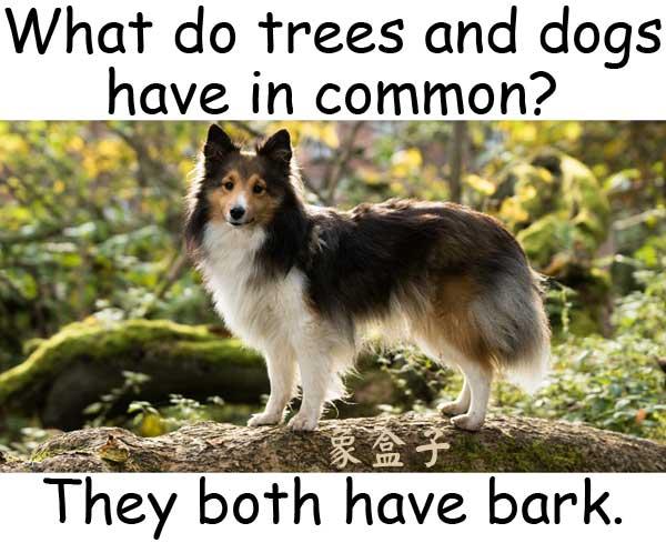 bark 吠叫 樹皮 dogs 狗 trees 樹木