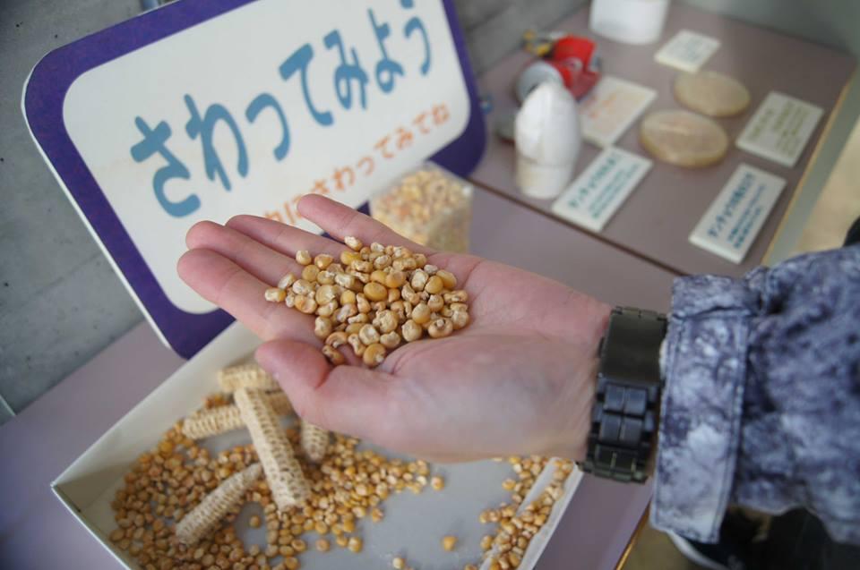 釧路地區舉行冬季限定的餵食活動。