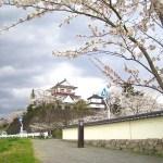 【宮城】城山公園是一所人人皆知的櫻花勝地!涌谷城跡(城山公園)