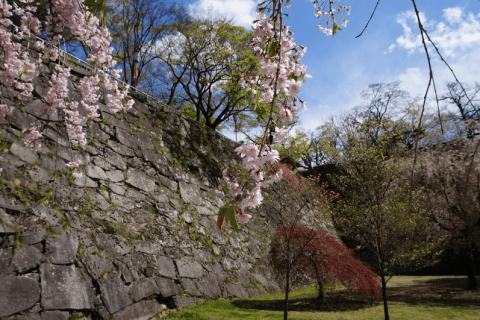 【岩手縣盛岡】乘坐蝸牛號去盛岡城跡公園玩吧!歷史悠久的石壁非常值得一看