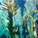 Seaweed article